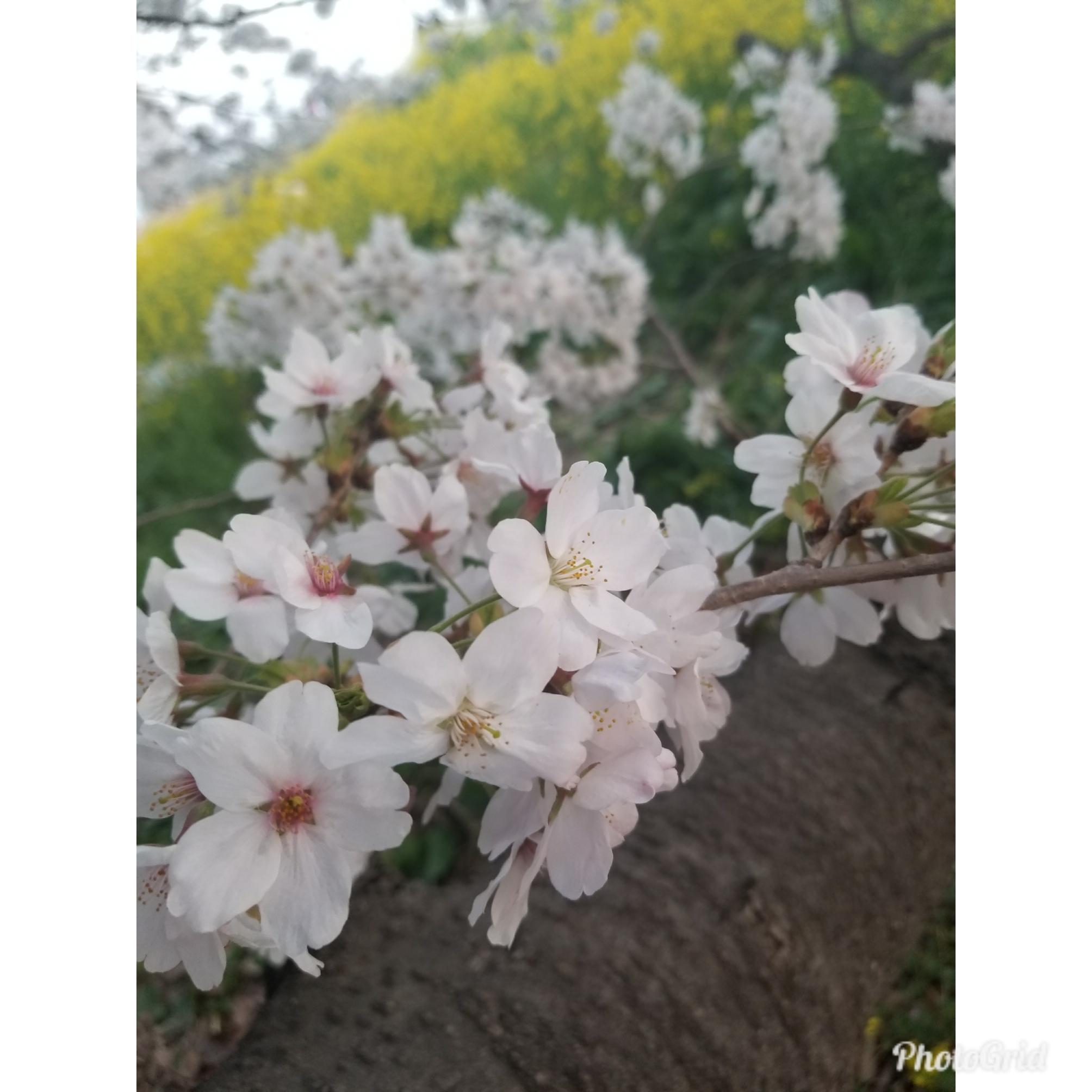 http://www.1mimi.com/news/PhotoGrid_1522455755157.jpg